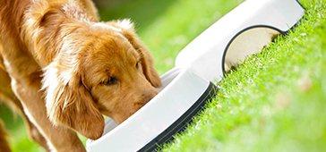 Alimentação para Cães: Gestantes e Filhotes